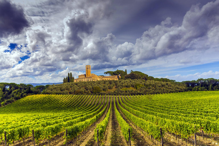 Tuscan vineyards: how valuable the real estate market
