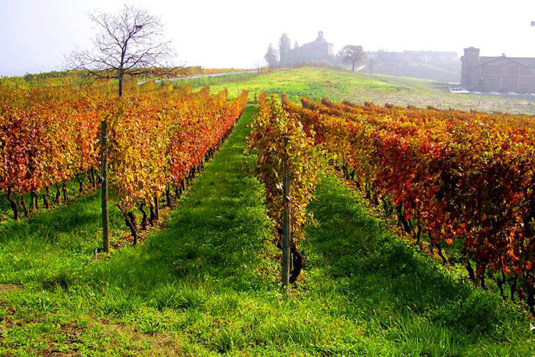 The wine dream in Tuscany