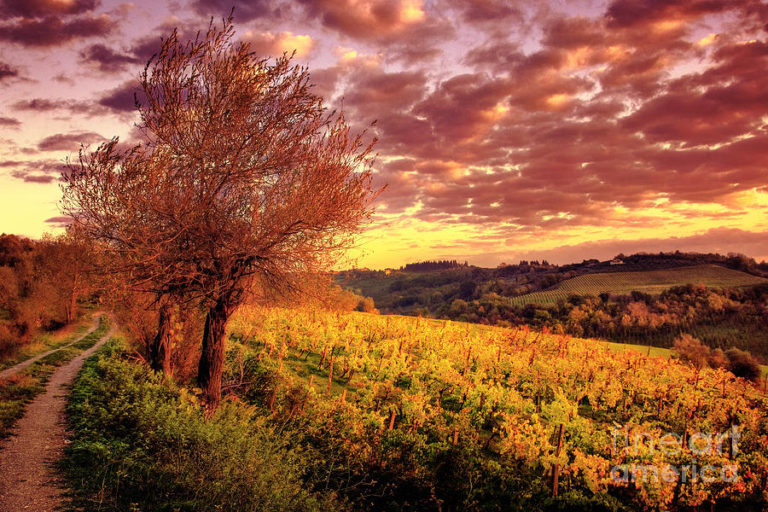 5 things to do during the spring in Tuscany