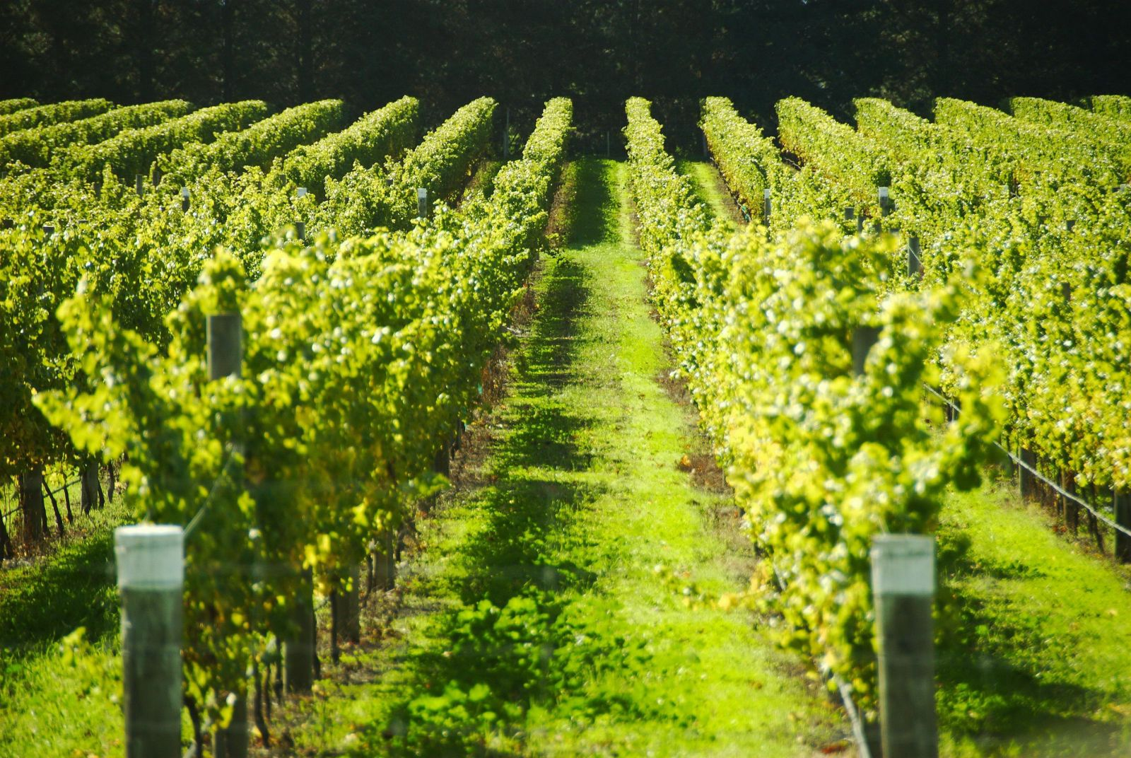 A winery in the Tuscany: the country green philosophy