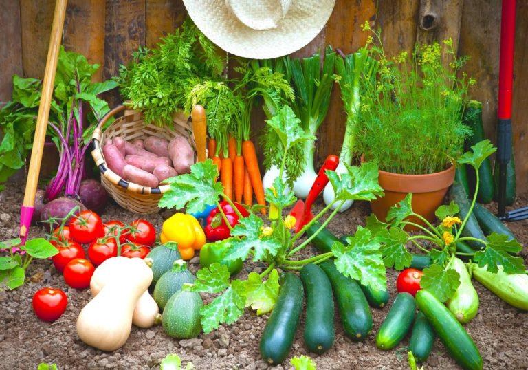 La ribollita : il profumo delle verdure del nostro orto nel piatto
