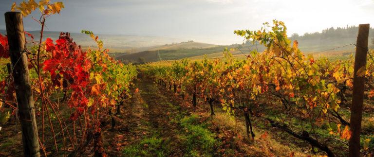 Caccia al Tartufo in Toscana: esperienza da vivere in Autunno
