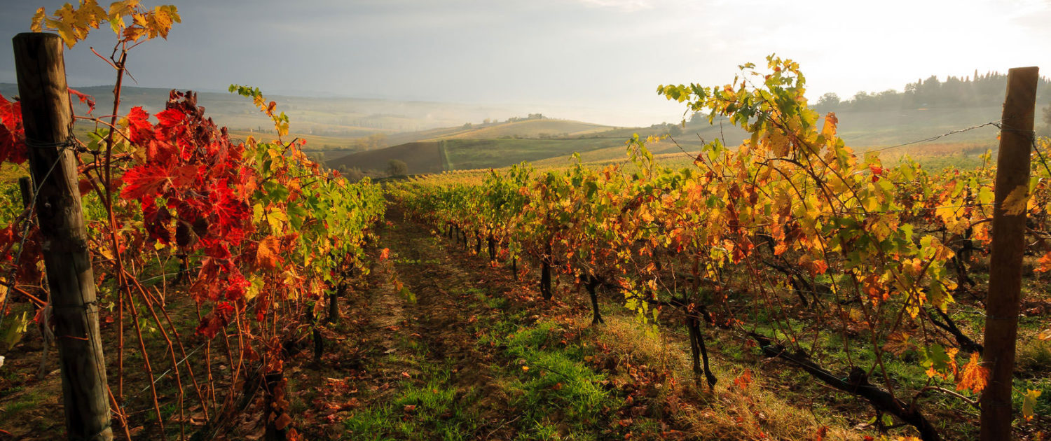 Truffle Hunting in Tuscany: A Top Fall Activity