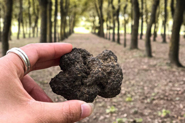 Truffle Hunting in Torciano Winery (A Cultural Experience You Cannot Miss!)