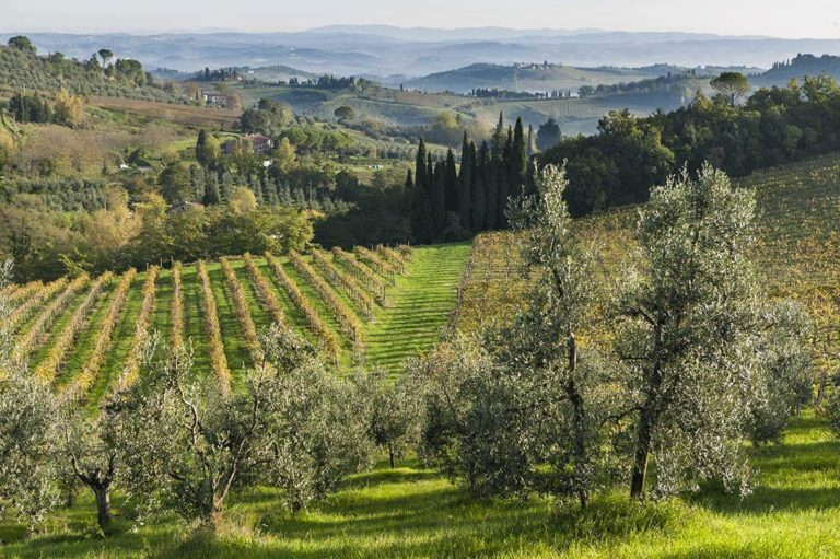 LOVE TUSCANY: tales of hope and resilience from Tenuta Torciano toughest year