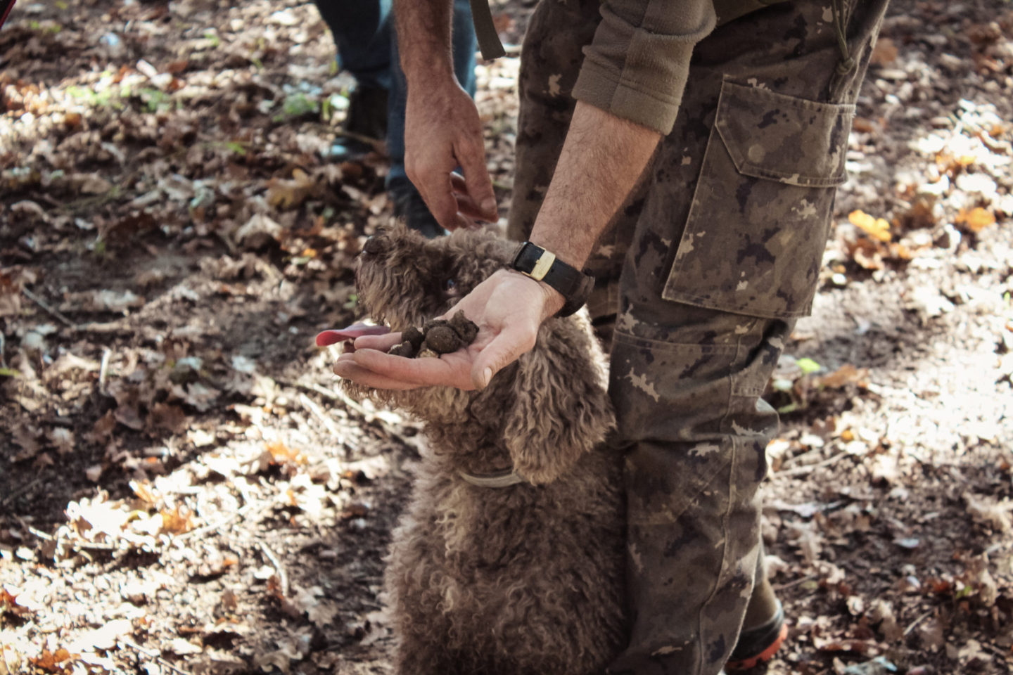 Hunting for truffles, with intriguing and excellent wines
