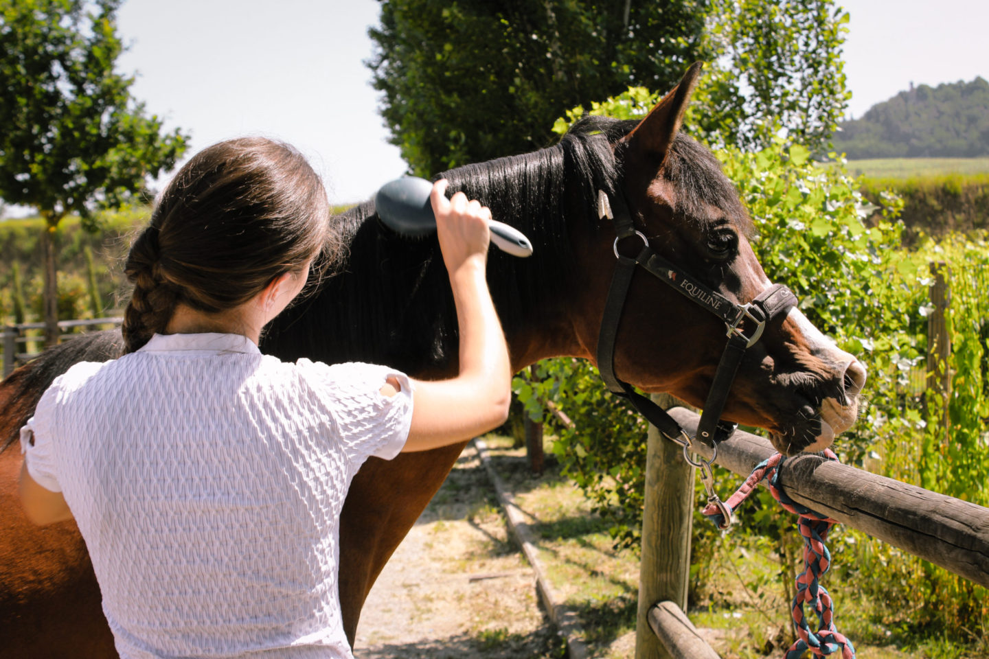 horses and wine