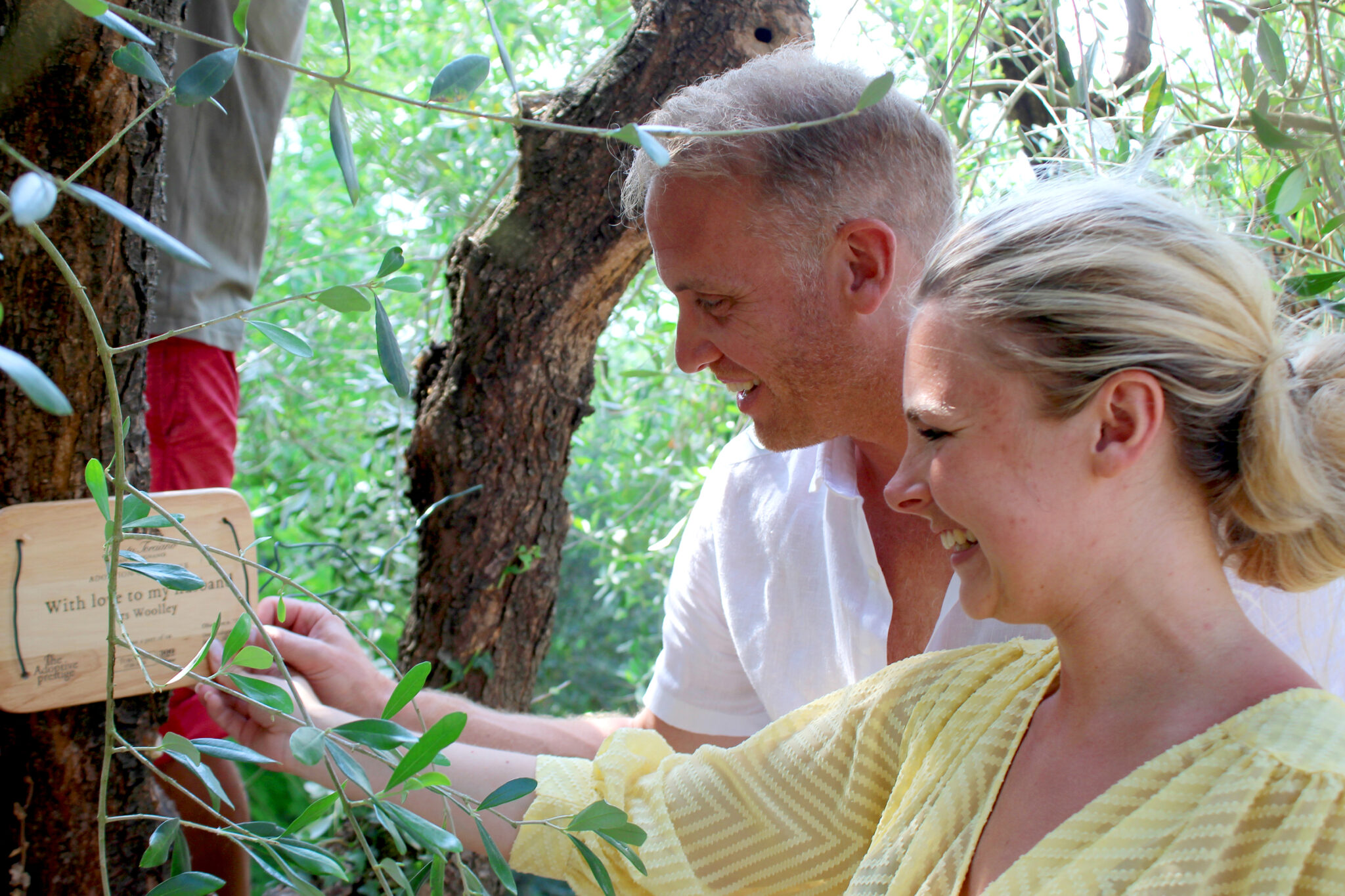 Adopt an Olive Tree – A gift for those you love and for Nature